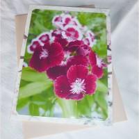 Carte double Oeillets et Cerisier de Céline Photos Art Nature