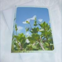 Carte double Fleurs de Véronique de Céline Photos Art Nature