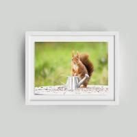 photo du joli petit écureuil et son arrosoir - 13 x 18 cm