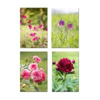 4 cartes  postales jolies photos de fleurs