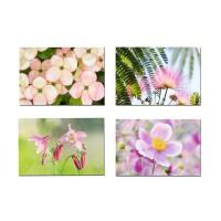 4 cartes  postales  fleurs  roses de jardins