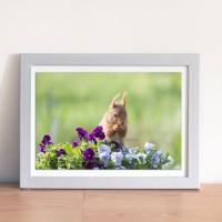 photo  écureuil dans le pot de fleurs - 13 x 18 cm