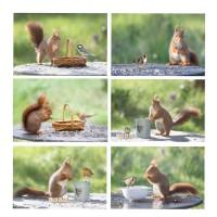 Ensemble de 6 petites photos écureuil et oiseaux, 10 x 15 cm