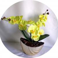 Orchidées vertes en fleurs de savon